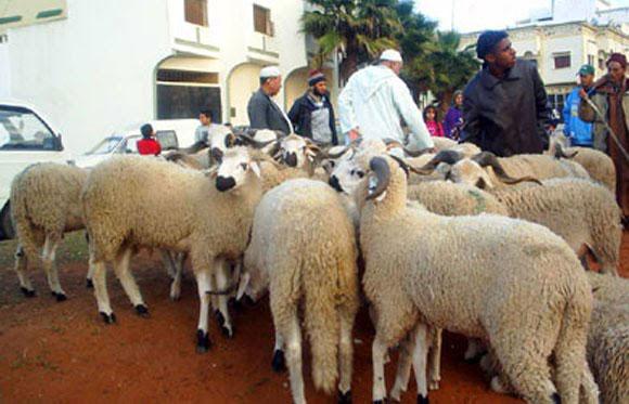 corderos-melilla-eid-el-adha