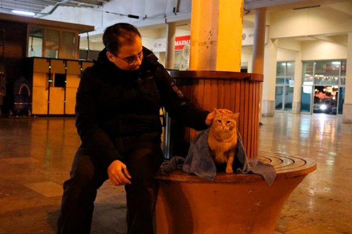 Huseyn Jurtseven con un gato callejero