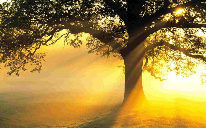 Naturaleza e islam
