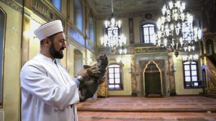 Un gato en una mezquita de Estambul